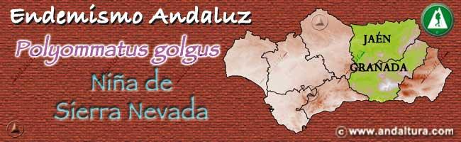 Endemismo Andaluz: Niña de Sierra Nevada - Polyommatus golgus -