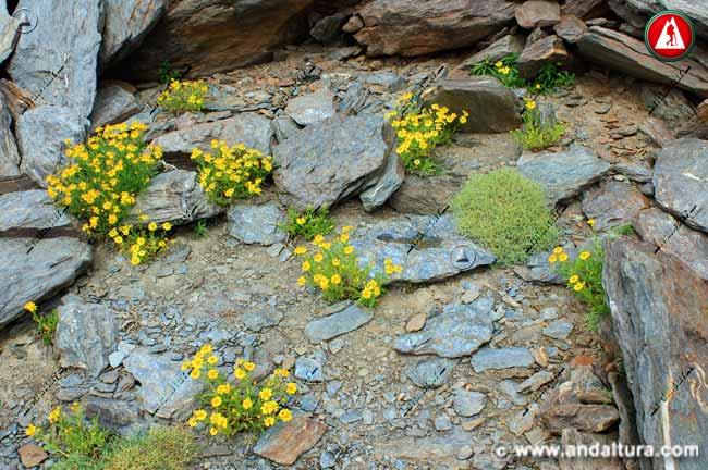 Entorno Suzón de Sierra Nevada en las proximidades del Mulhacén