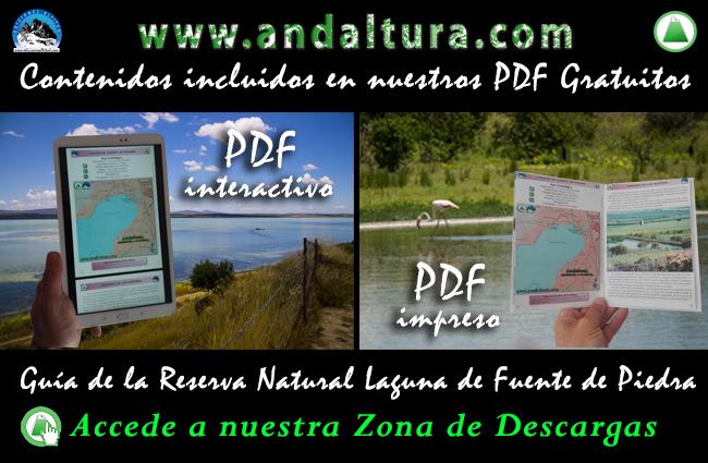 Descárgate gratis los PDF´s de la Guía de la Reserva Natural Laguna de Fuente de Piedra