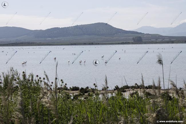 Vista de la Vertiente oeste de la Laguna de Fuente de Piedra