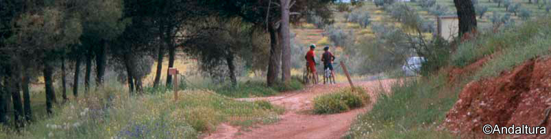 Rutas en BTT por Andalucía