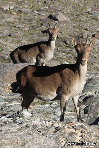 Habitantes naturales de la zona, no clonadas