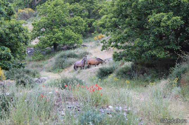 Castañas y sotobosque en el Valle de Lanjarón