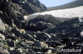 Tunel de nieve en el río Lanjarón