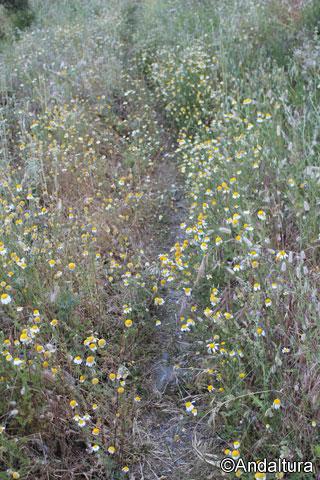 Vereda rodeada por flores