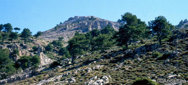 Cerro del Buitre desde las cercanías de los Prados del Buitre