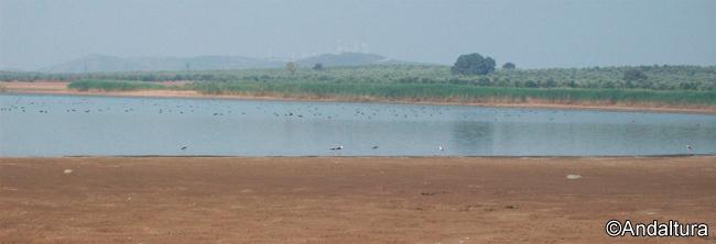 Aves en el interior de la Laguna de la Ratosa, entorno de la laguna