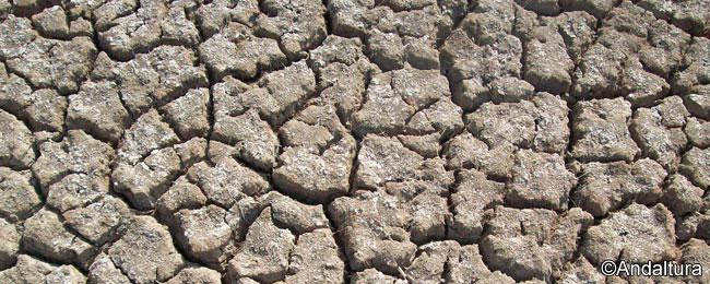 Grietas al bajar el nivel de las aguas en la Laguna de la Castañuela
