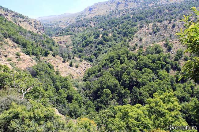 Castaños en la zona baja del Valle de Lanjarón