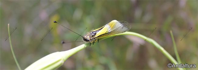 Lepidoptero del Valle del río Grande de los Bérchules