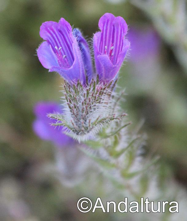 Flora en el Valle de Lanjarón