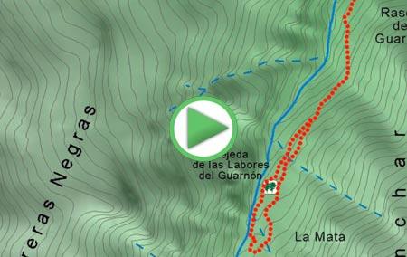 Animación para visitar la Tejeda de las Labores del Guarnón, declarada Arboleda Singular de Andalucía