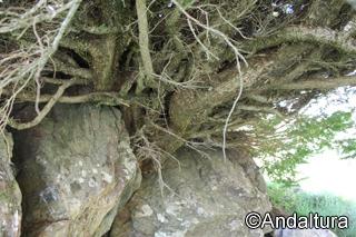 Tejo entre rocas