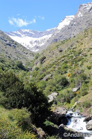 Tejos en el Valle del río Guarnón