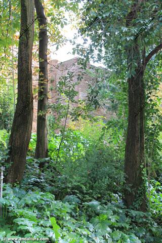 Bosque de la Alhambra y Torre de los Abencerrajes