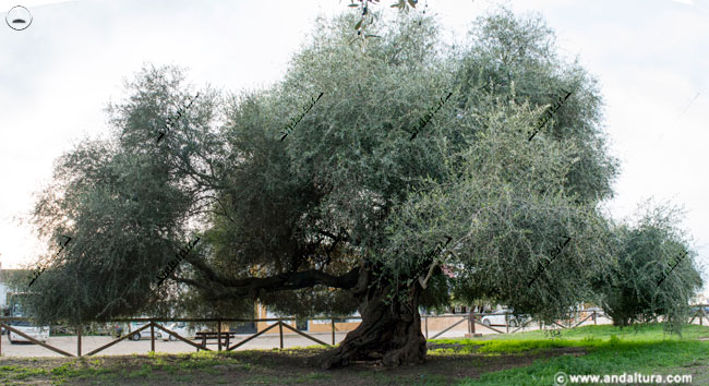 Monumento Natural Acebuchal del Rocío