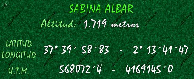 Datos Geográficos de la Sabina Albar milenaria