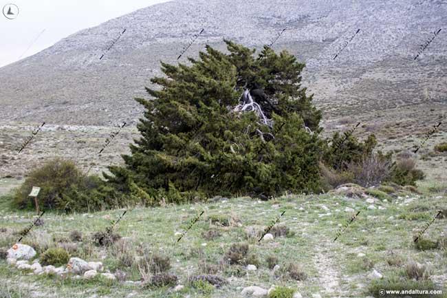 Monumento Natural Sabina Albar