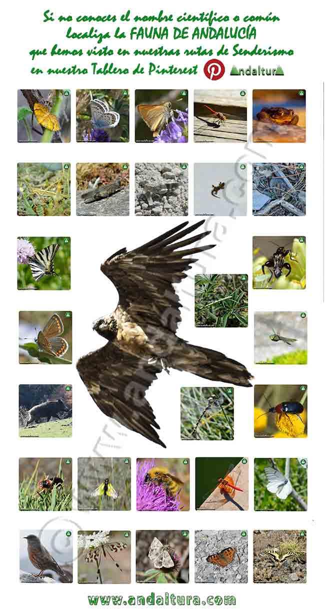Ejemplo del Tablero de Andaltura sobre la Fauna de Andalucía en Pinterest