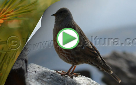Animación con diferentes ejemplos de la Fauna de Andalucía
