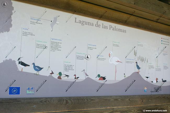 Cartel interior de las aves que podremos ven en la Laguna de las Palomas