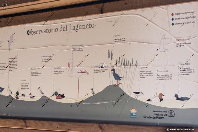 Cartel de las aves que podremos contemplar desde el Observatorio El Laguneto