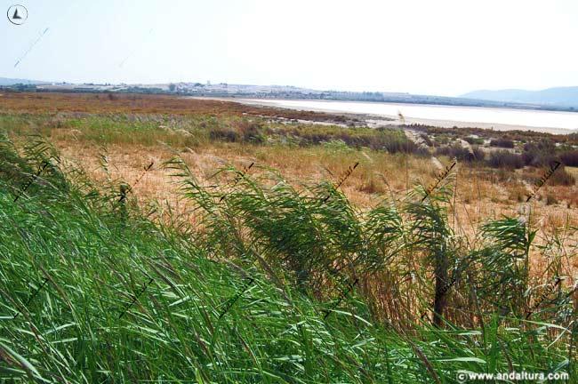 Entorno de la Reserva Natural Laguna de Fuente de Piedra, al fondo la localidad de Fuente de Piedra