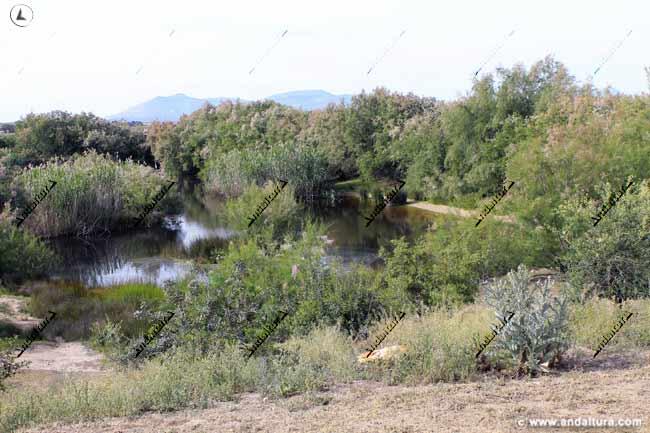 Laguna de las Palomas - Fuente de Piedra
