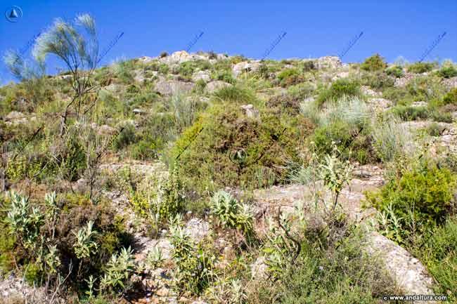 Terreno de ascensión y descenso, monte bajo en la Sierra de la Camorra