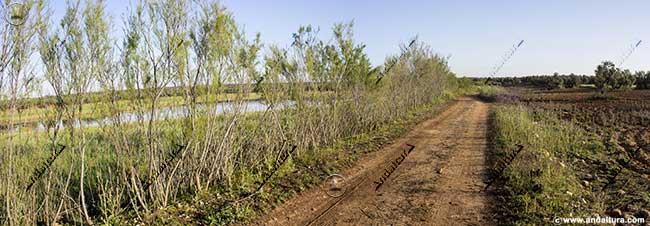 Pista de la Laguna de la Ratosa a la de la Castañuela