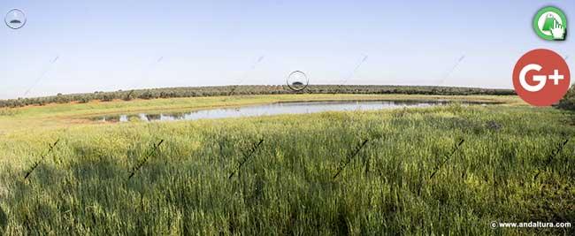 Laguna de la Castañuela desde la carretera que une la Roda de Andalucía y Alameda