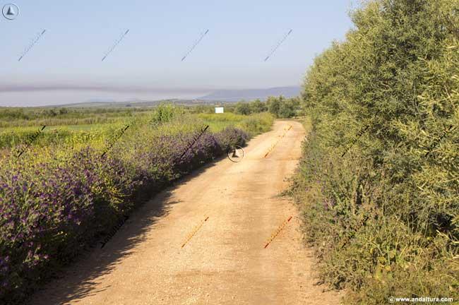 Pista entre olivos en las cercanías de la Laguna de la Ratosa